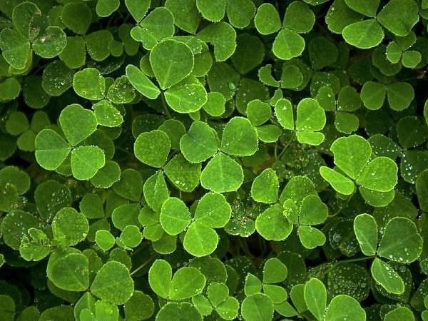 Thinking Green:  An Astrological Perspective
